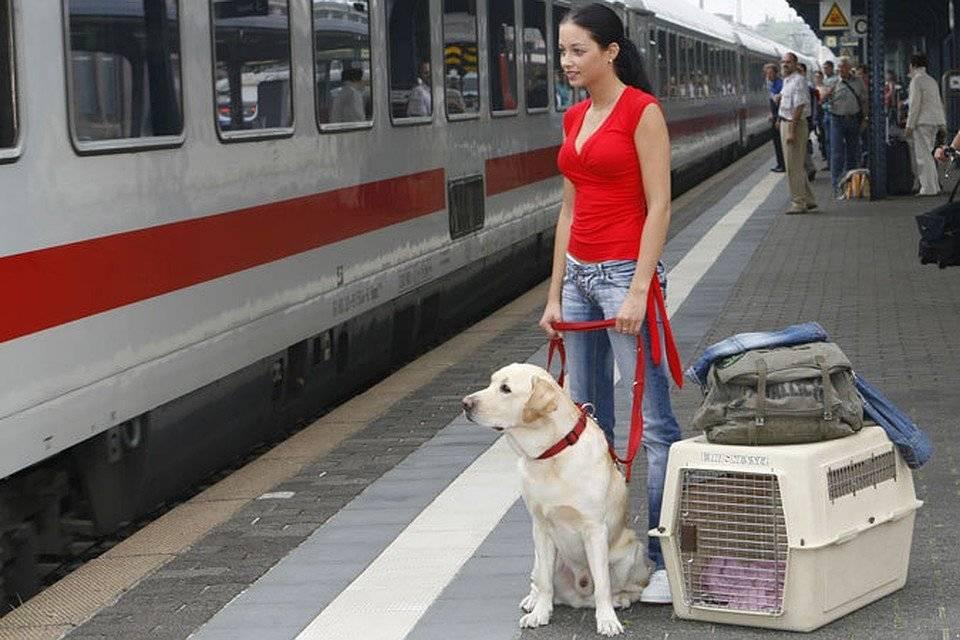 Перевозка животных в поезде