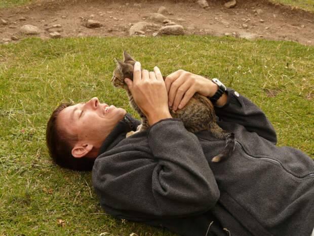 Понимают ли кошки человеческую речь: интересные факты
