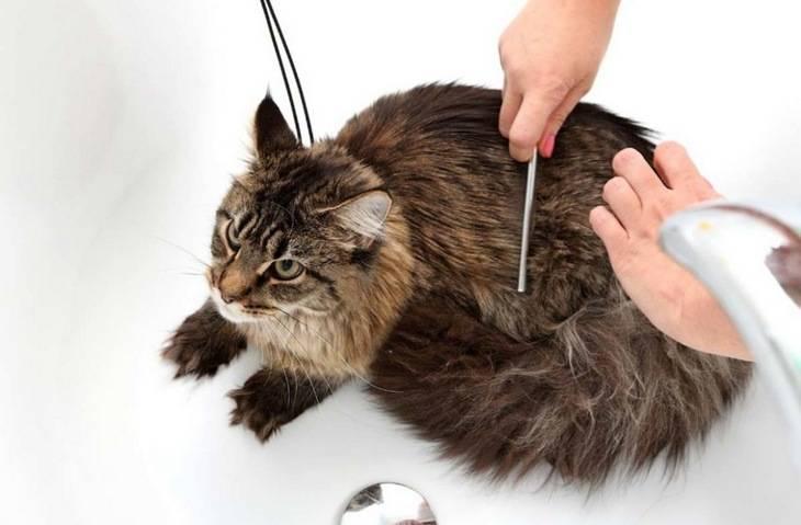 Колтуны и волосяные катышки у кошек - симптомы, лечение, препараты, причины появления | наши лучшие друзья