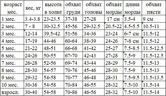 Таблица веса щенка чихуахуа по неделям