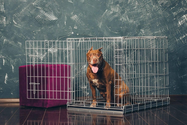 Клетка для собаки: плюсы и минусы.