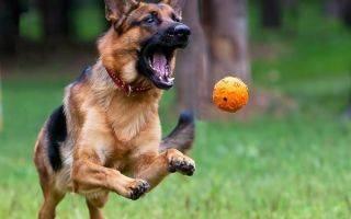Собака плохо ест, но активная   абост, сеть ветеринарных клиник
