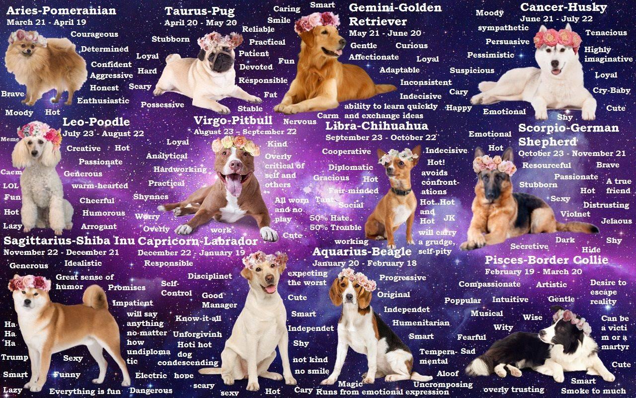 Год собаки 2018: какая порода вам подходит по знаку зодиака