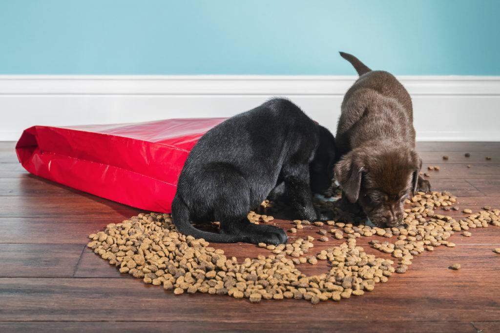 Можно ли кормить собаку только сухим кормом?