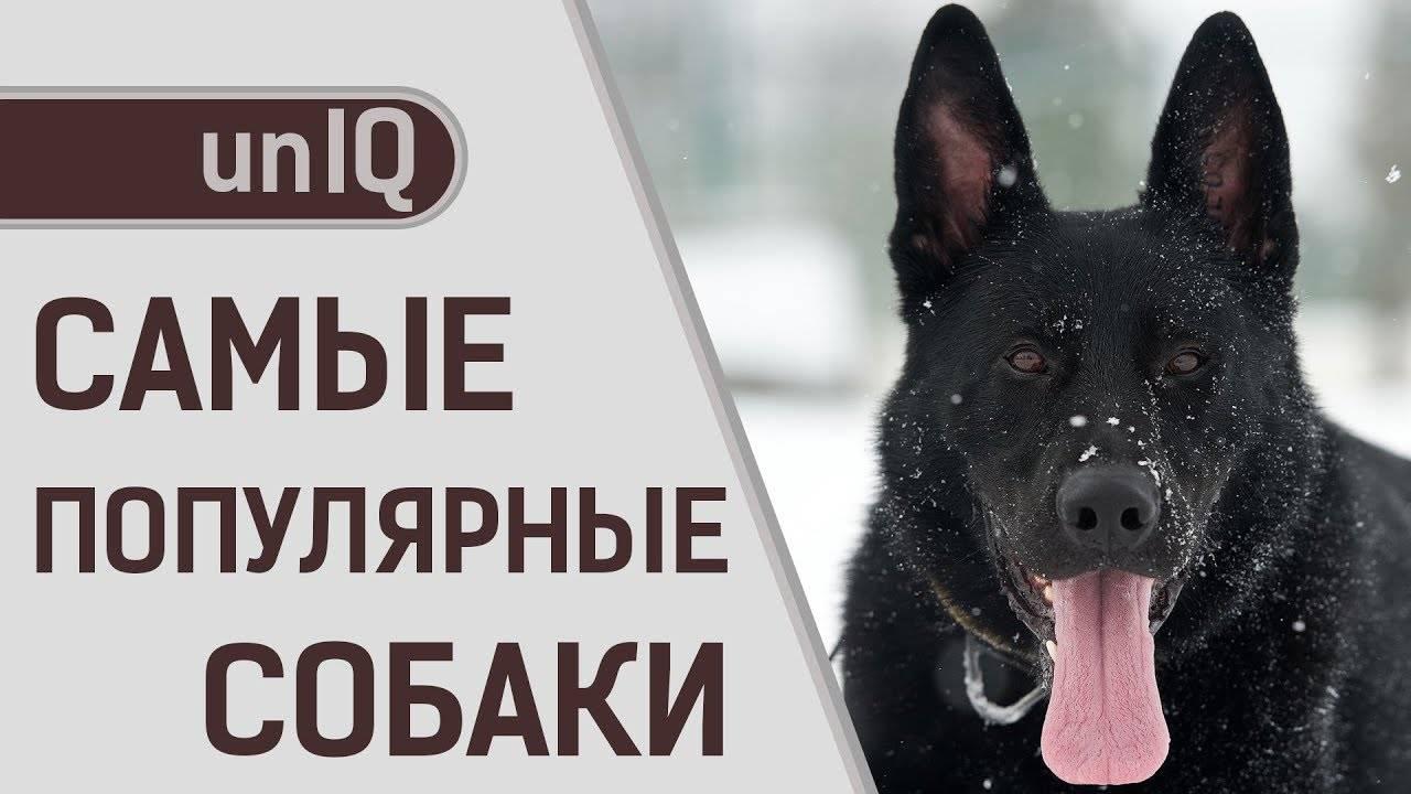 Самые умные и преданные породы собак в мире