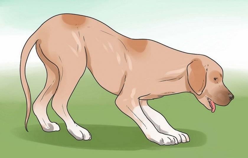 Собака хрюкает как будто задыхается и подавилась