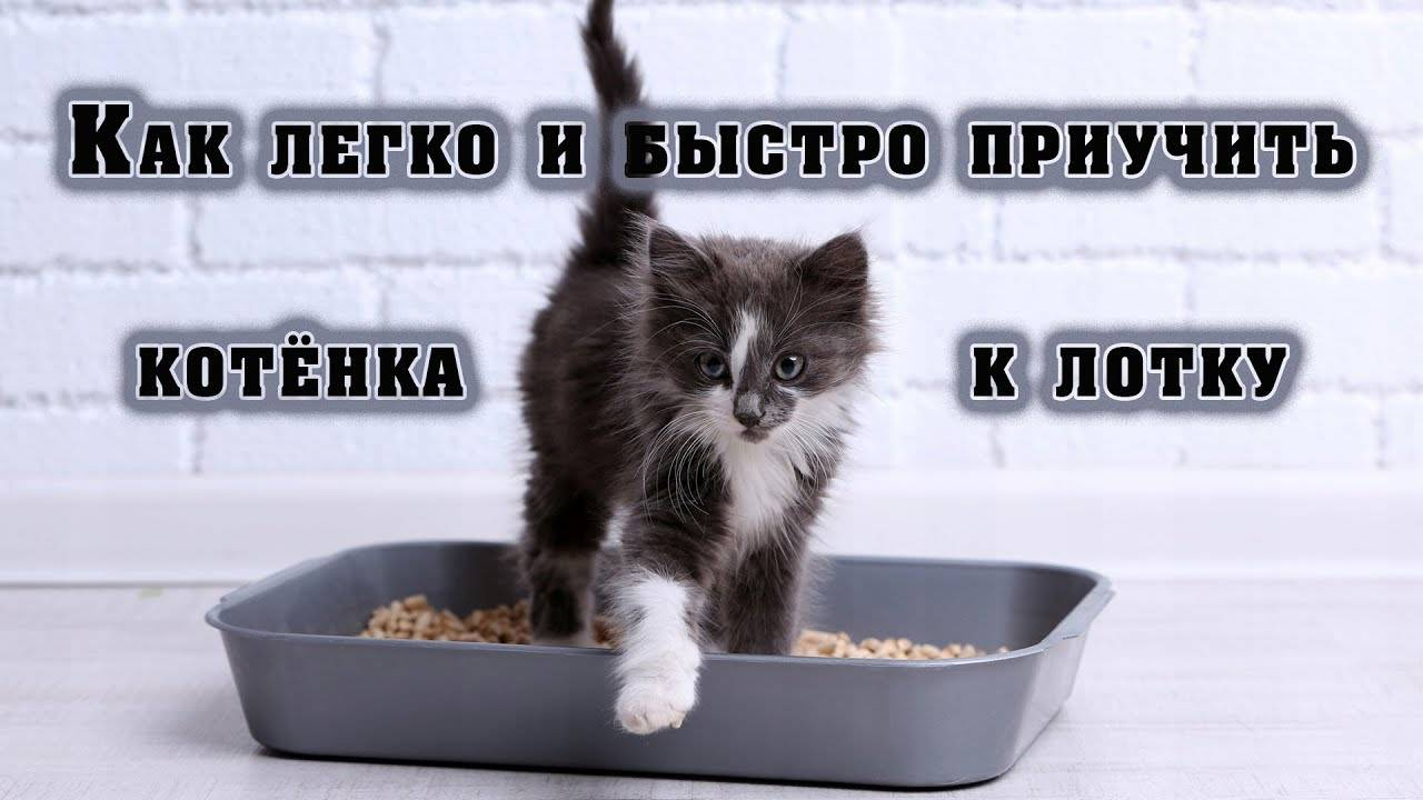 Как приучить взрослого кота и кошку к лотку   быстро, бездомных, уличных