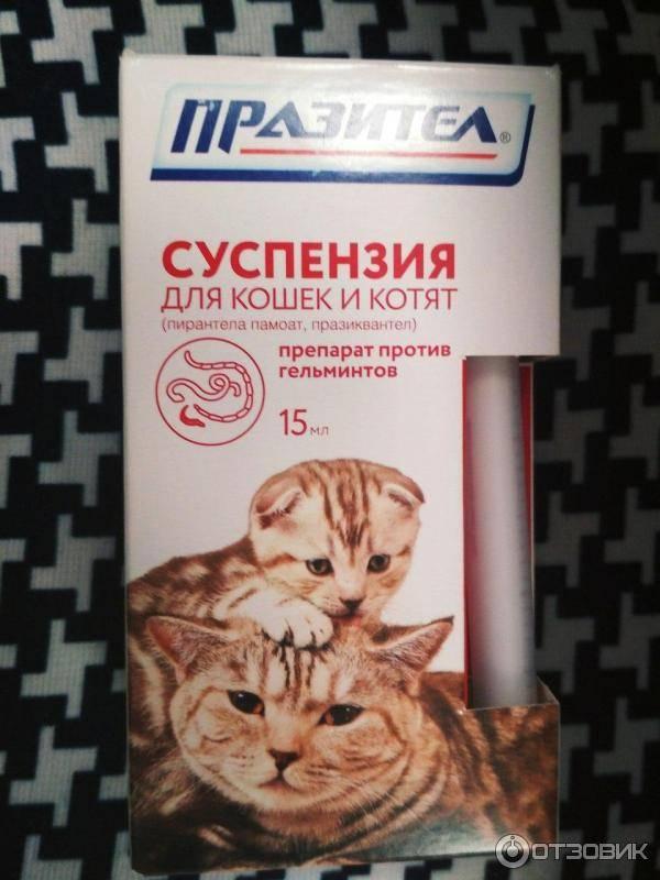 Празител для кошек и котят: инструкция по применению, цена, отзывы