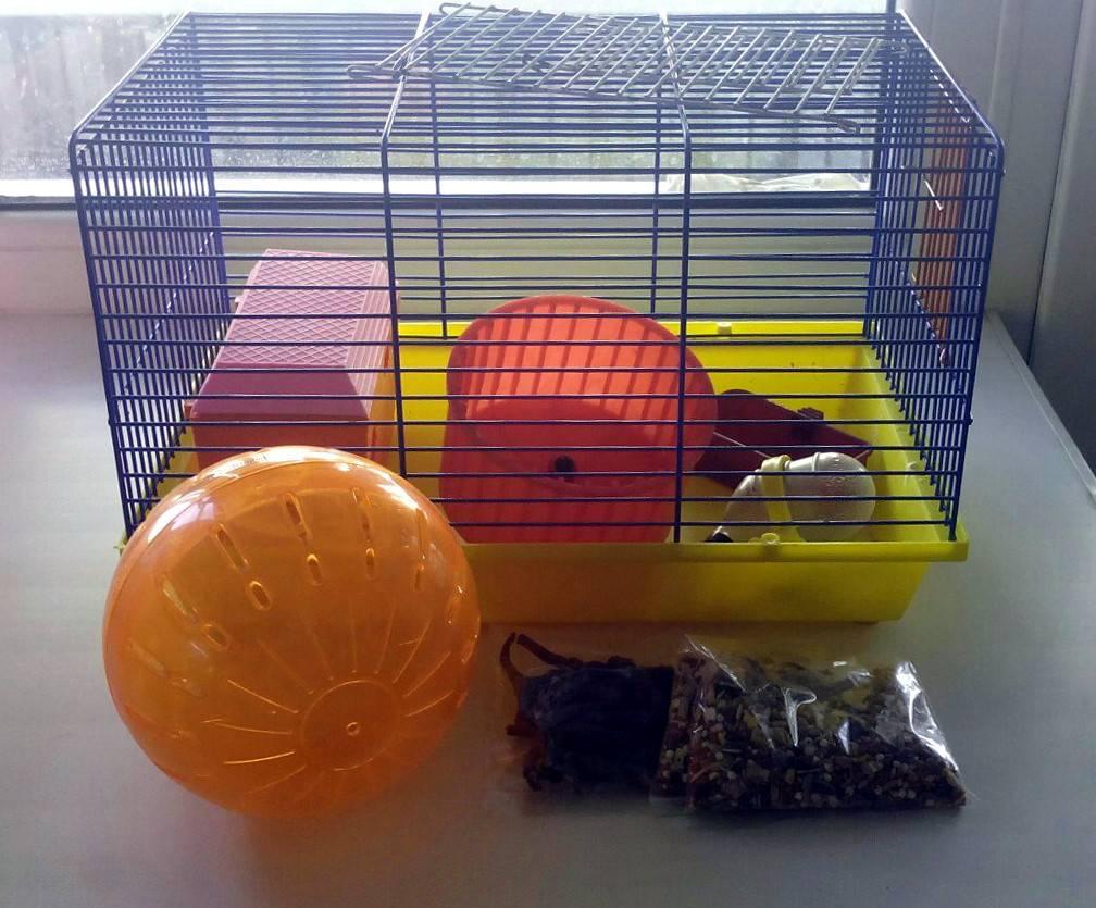 Террариум и аквариум для хомяка: секреты содержания, уход и обустройство жилища