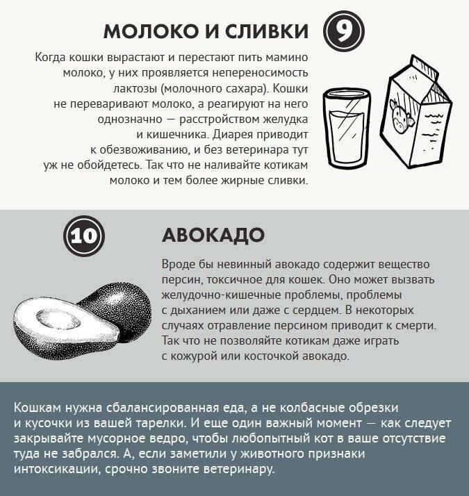 Маламут: чем кормить в домашних условиях, стоит ли держать в квартире аляскинскую породу, а также отношение к детям, выбор шлейки, размеры будки, сроки для вязки