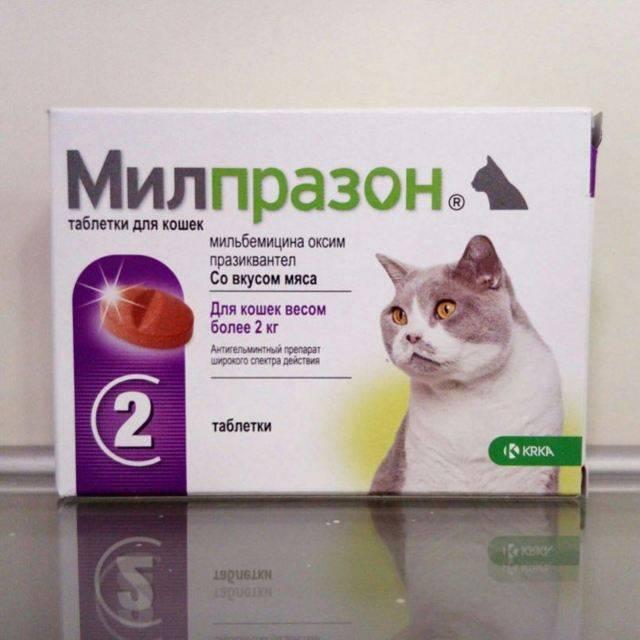 Милпразон для кошек: инструкция по применению