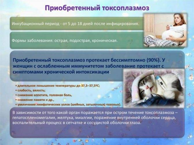 Токсоплазмоз у животных: причины и симптомы, лечение и профилактика
