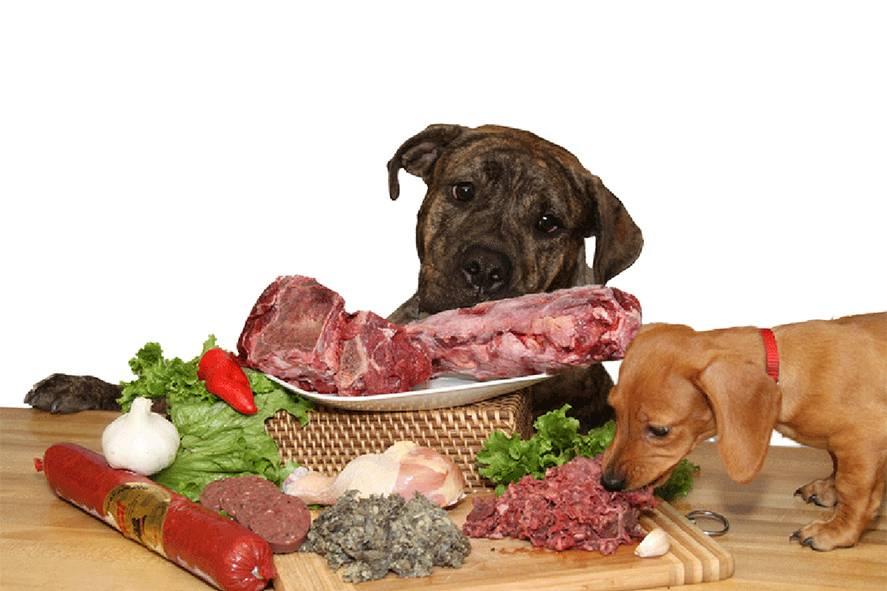 Можно ли собаку кормить свининой: употребление питомцем мяса в сыром и вареном виде, польза, когда нельзя давать