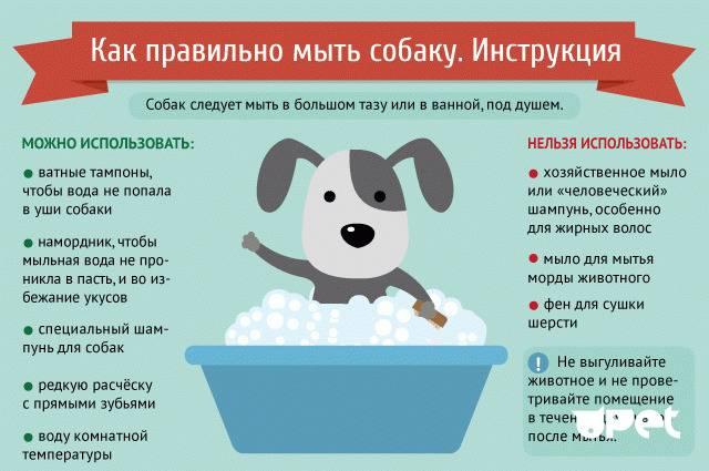 Как общаться с щенком до 3 месяцев