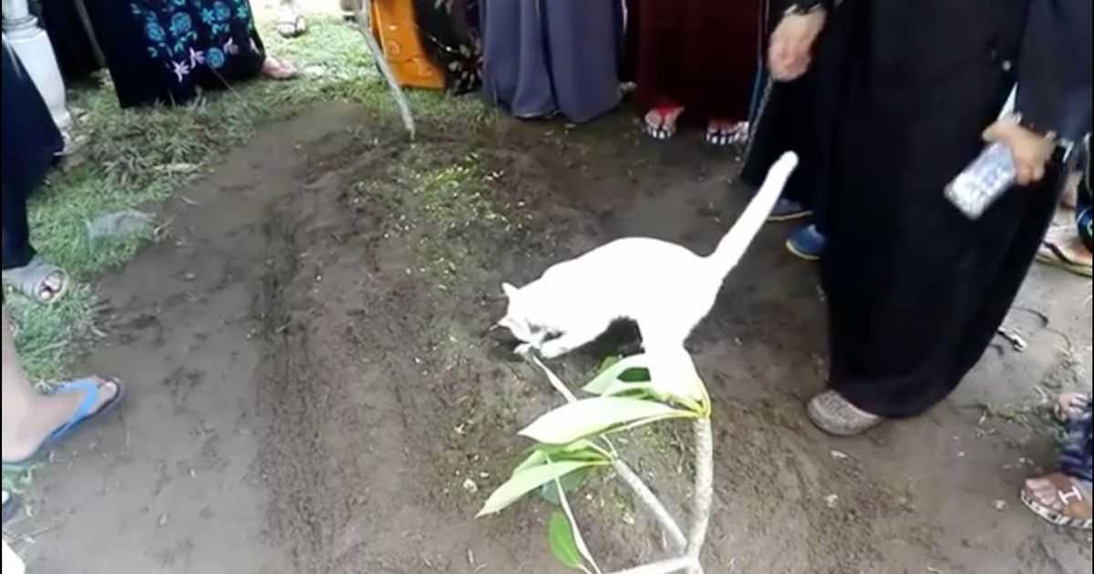 Что будет если раскопать могилу кошки. если умерла кошка