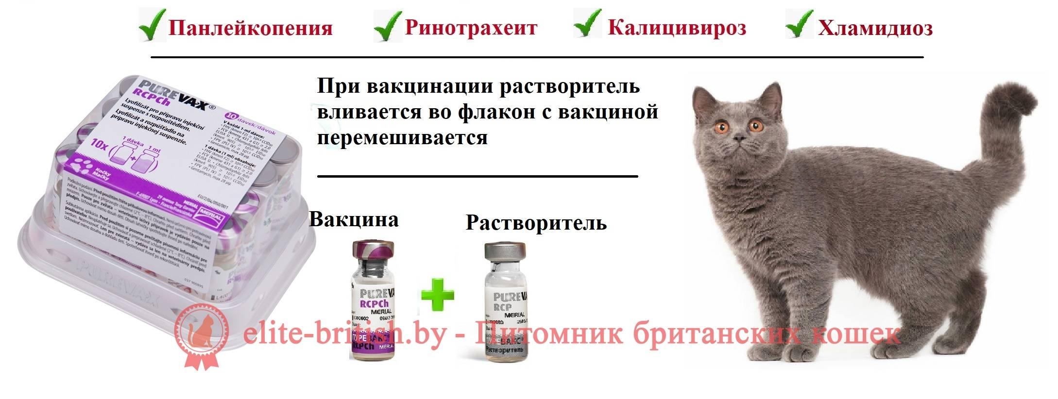 Прививки котятам по возрасту: какие и когда делать прививки кошкам