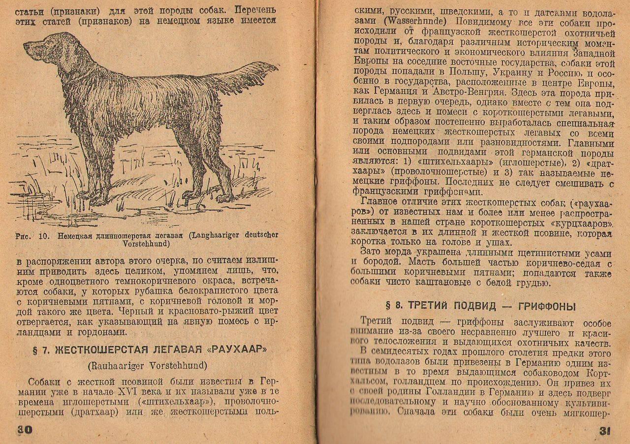Какие есть легавые породы собак
