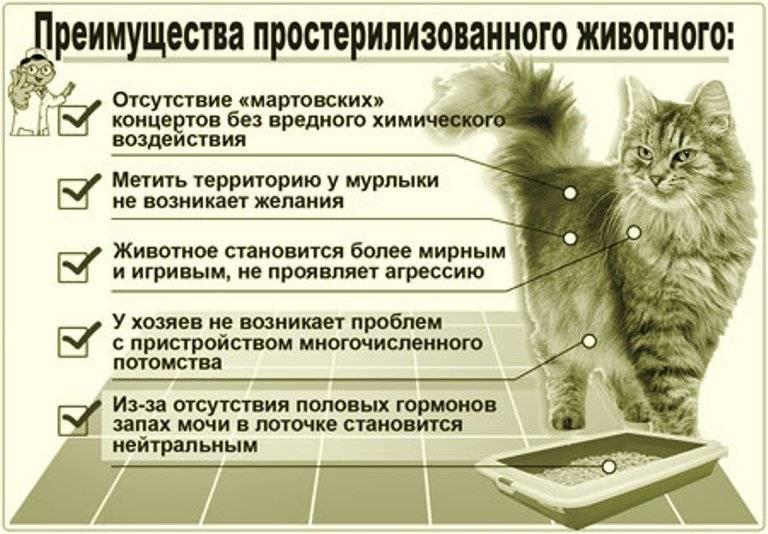 8 типичных ошибок хозяина, которые сокращают жизнь кошки