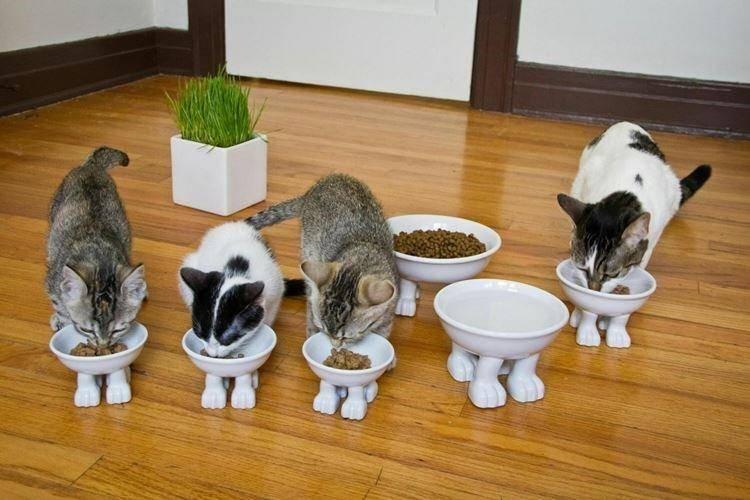 Как подружить кошку с собакой в квартире или доме – возможно ли это?