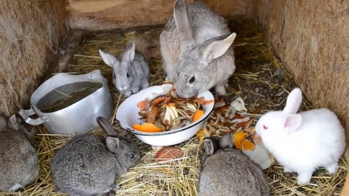 Можно ли давать кроликам хлеб или сухари