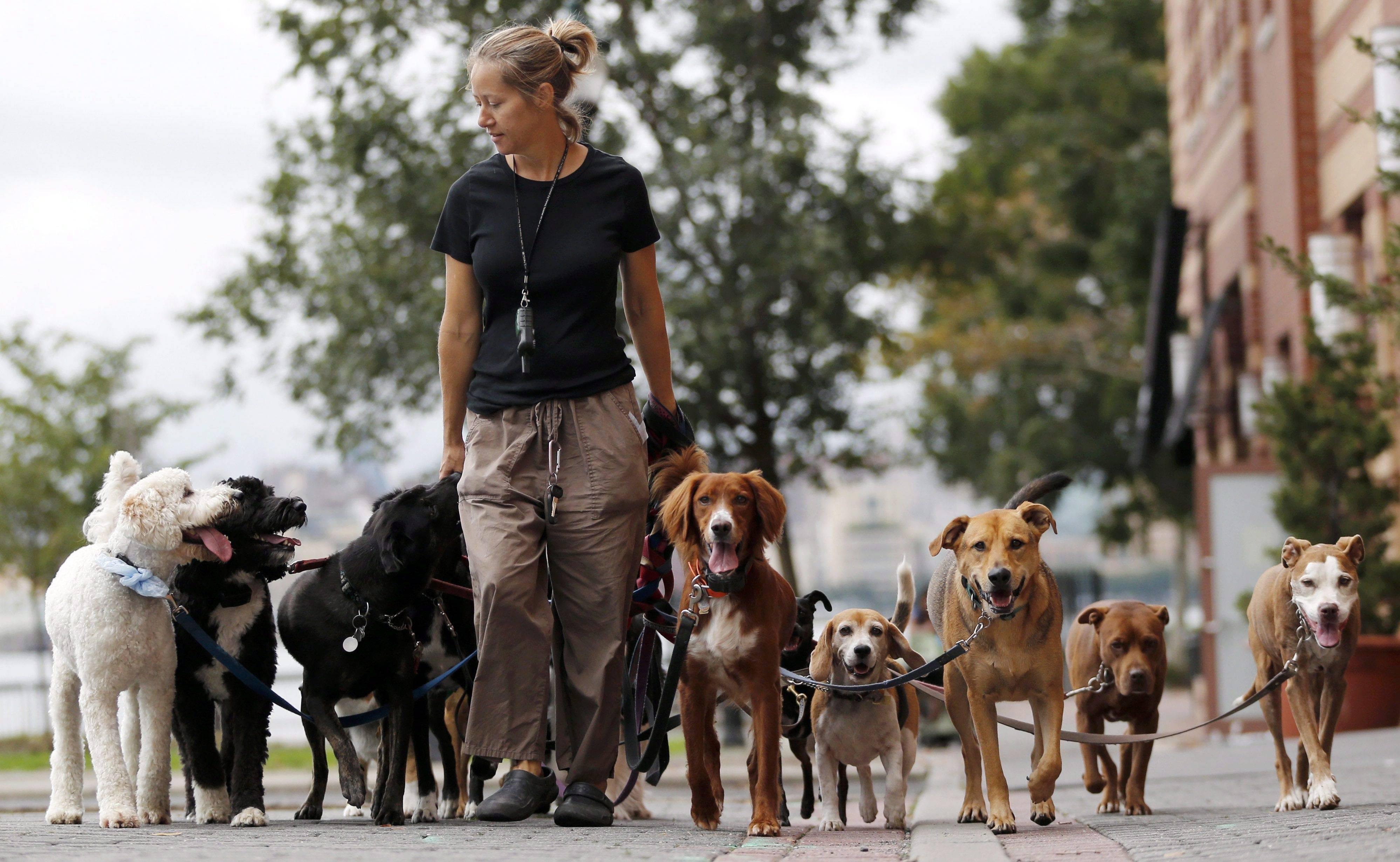 ≡ топ 13 ᐈ лучшие породы собак для охраны частного дома   woofy dog