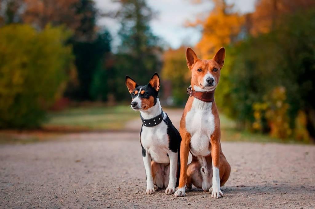 Топ-12 лучших собак для квартиры – рейтинг 2020 года
