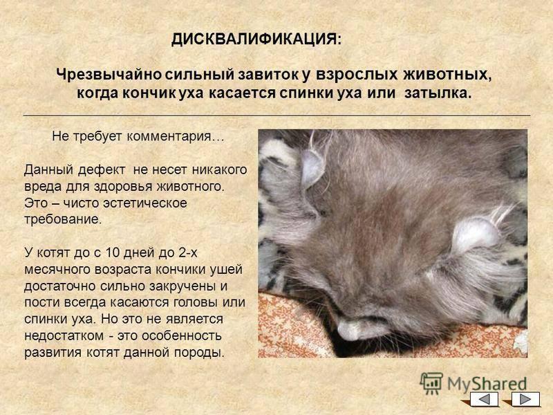 Новорожденные котята - уход и содержание, помощь кошке при родах