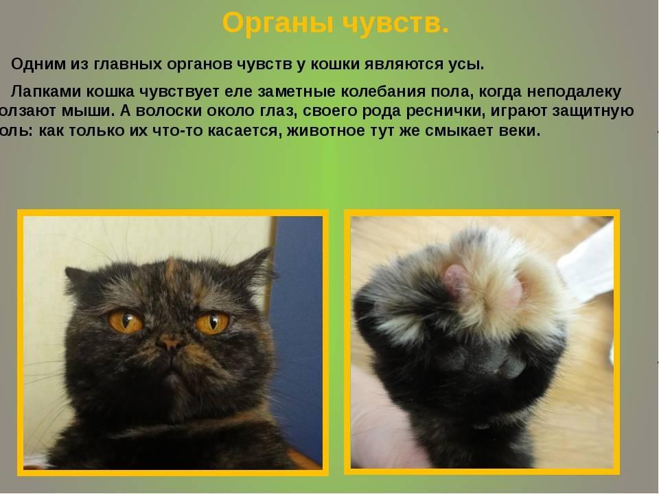 Как кошки видят мир - other