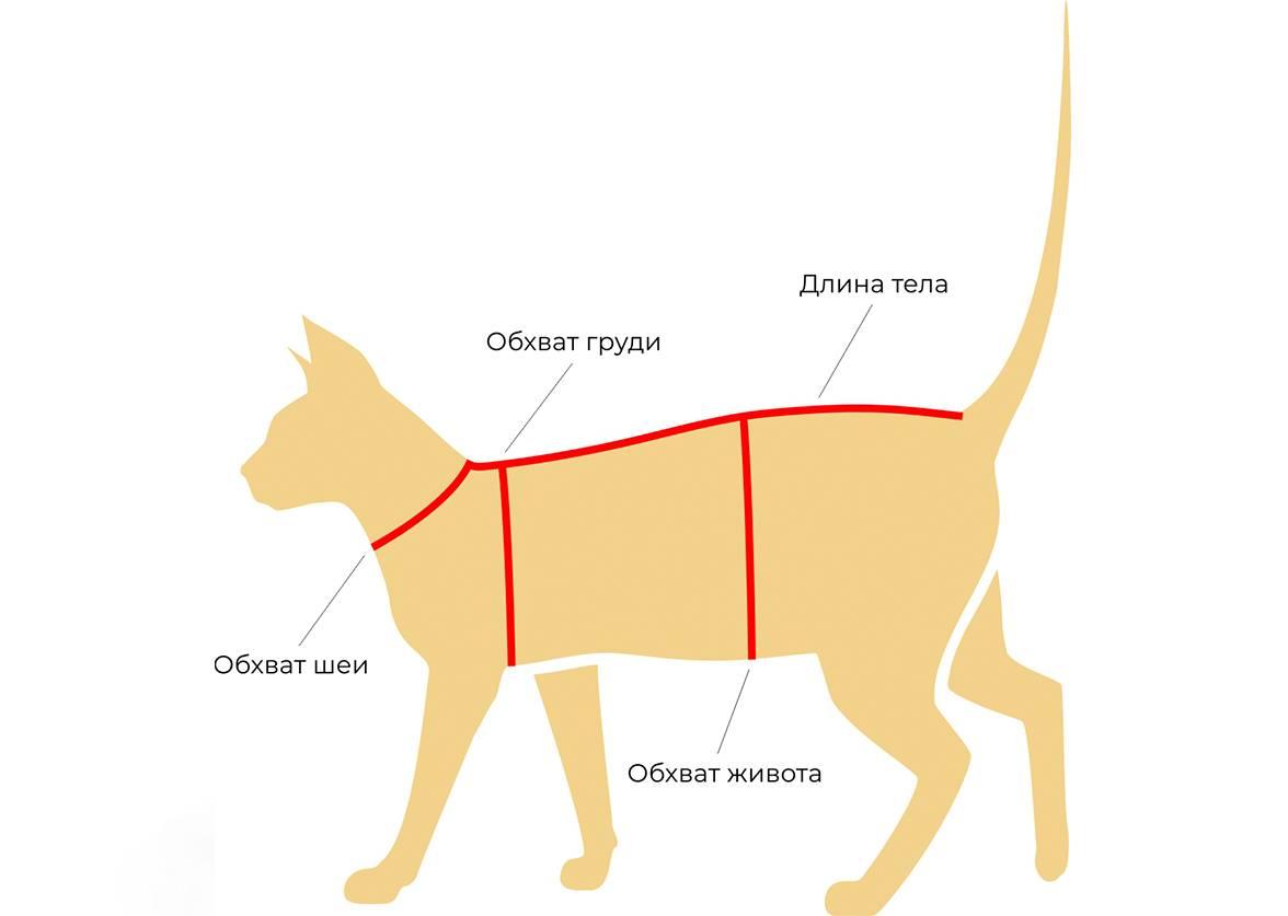 Интересные и простые выкройки комбинезонов для собак