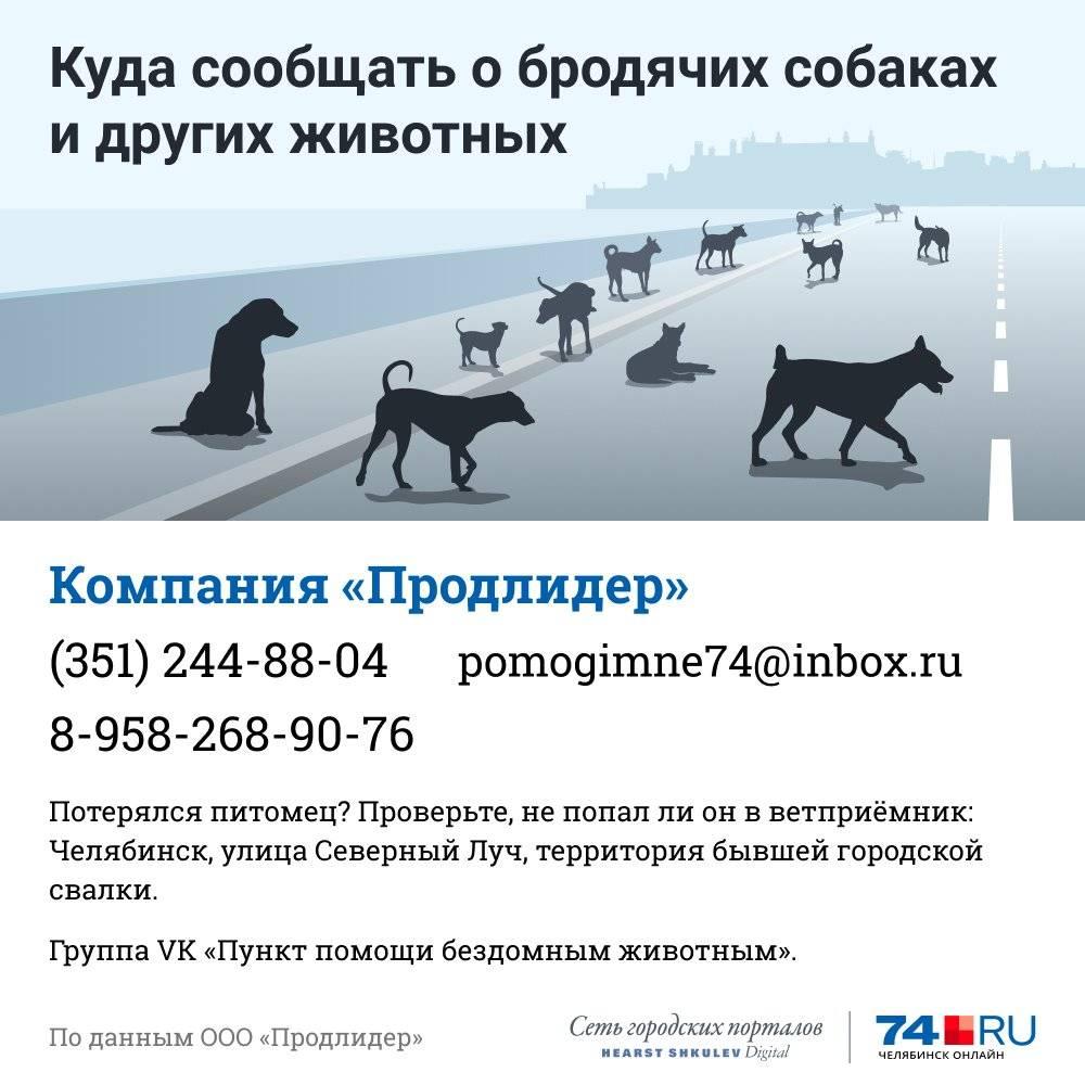 Отлов собак: кого можно вызвать от бродячих псов