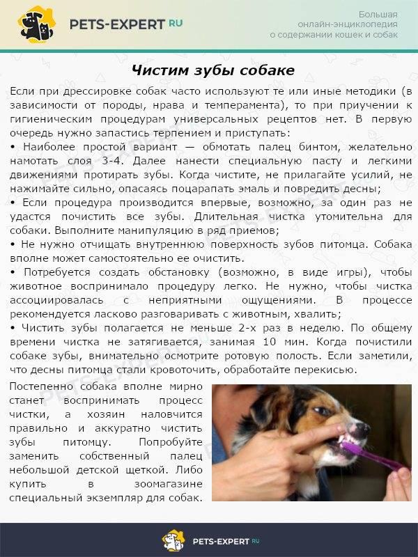 Как определить возраст собаки (+ таблица сравнения возраста собаки и человека)