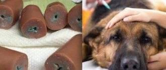 5 причин почему собака вычесывает шерсть на боках, лапах, спине и возле хвоста – что делать