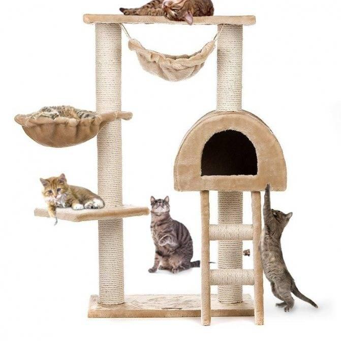 Как приучить кота к когтеточке: способы, размещение в интерьере