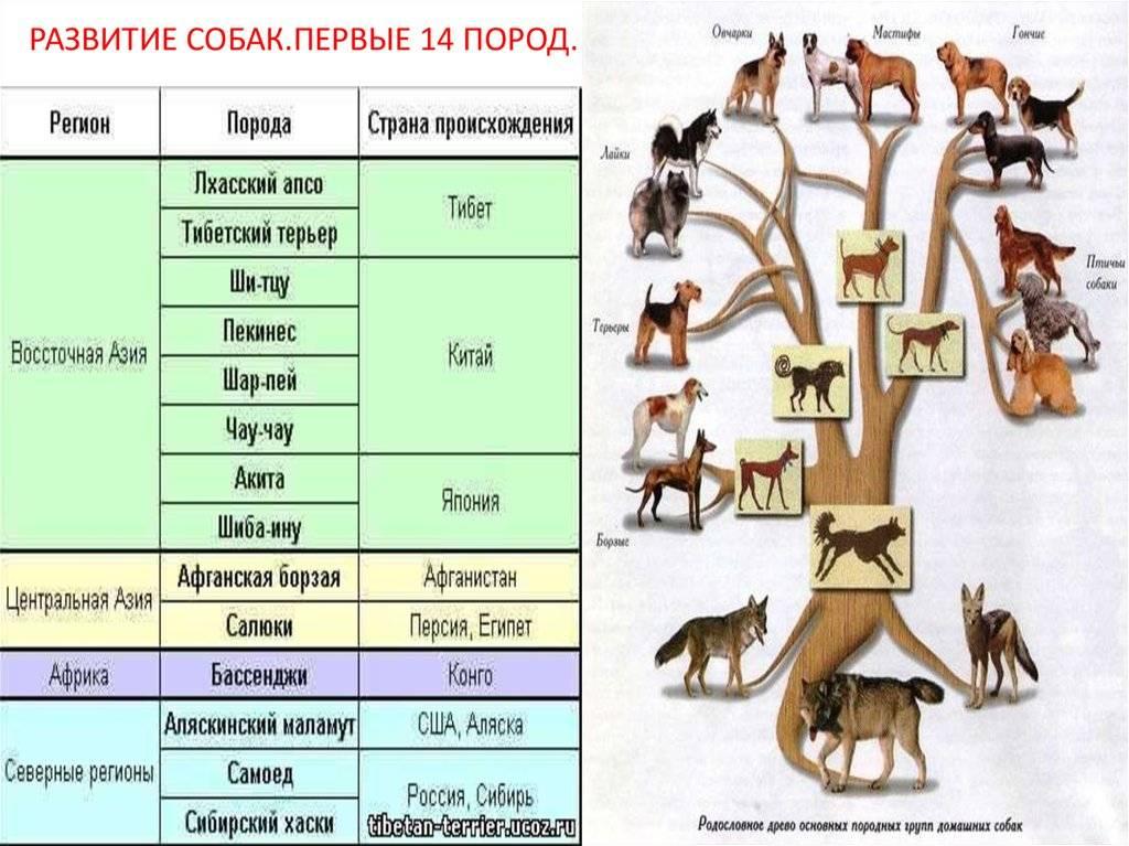 Сколько собак в мире. сколько пород собак существует в мире