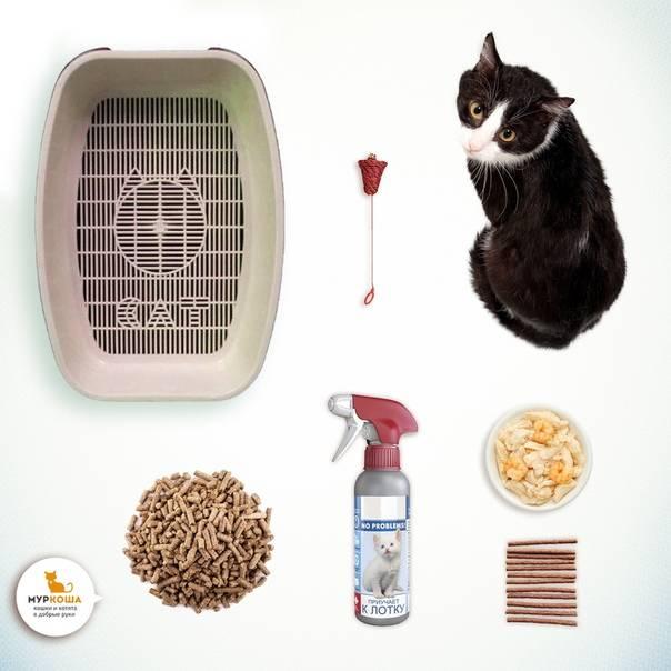 Почему кошка перестала ходить в лоток? как исправить ситуацию, почему кошка ходит где попало и как отучить от плохой привычки?