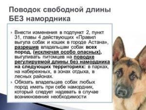 Правила выгула собак: закон рф, штрафы, комментарии