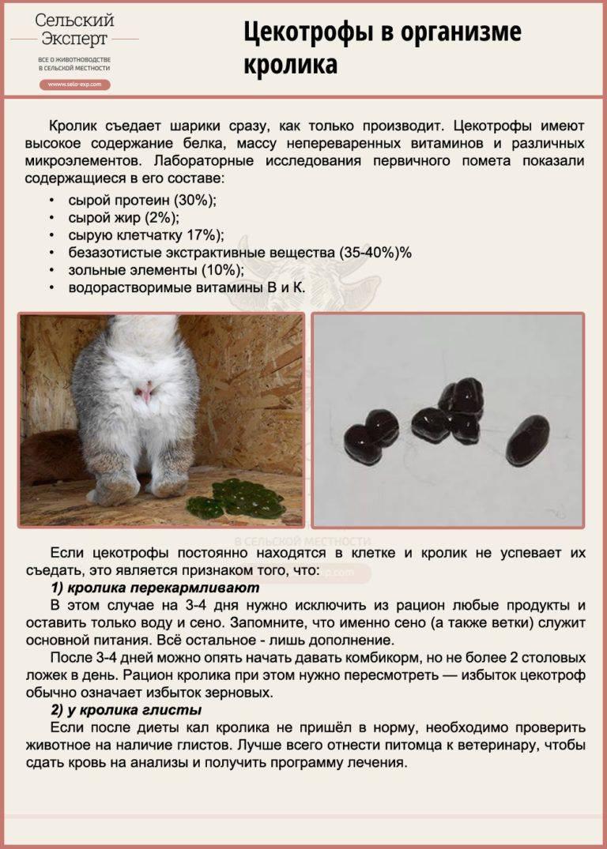 Понос у кроликов: чем лечить и что можно дать от зеленого поноса или вздутия в домашних условиях, причины и лекарства для этого