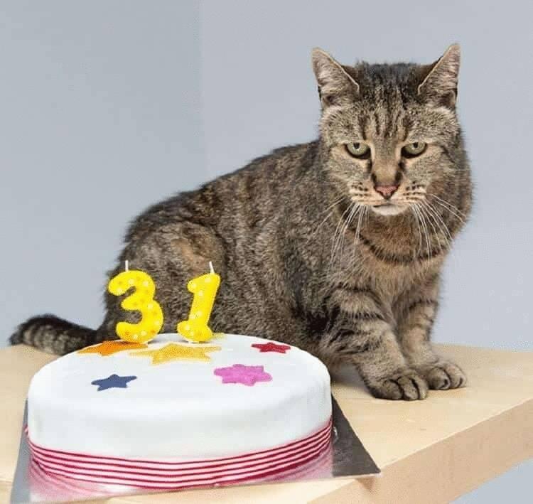 Самые долгоживущие породы домашних кошек