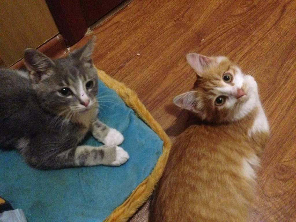 Куда пристроить котят: 5 вариантов обеспечения кошек новым домом.2