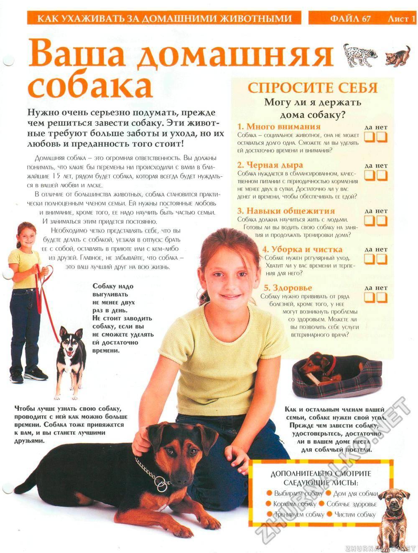 Содержание самоедской лайки в домашних условиях: уход за собакой, правильное кормление и особенности выгула