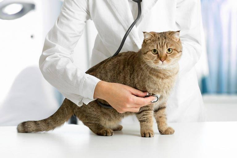 Что дать кошке чтобы она не просила кота народные средства