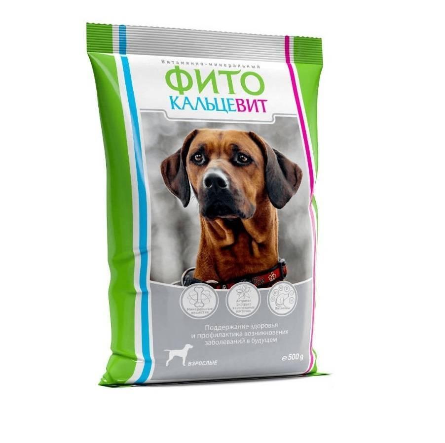 Для чего дают кальций собаке: важность витамина для мелкой и крупной пород