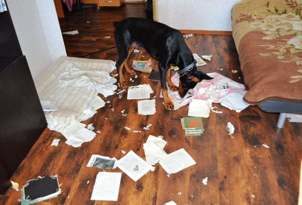 По каким причинам у собак может пахнуть тухлятиной из ротовой полости