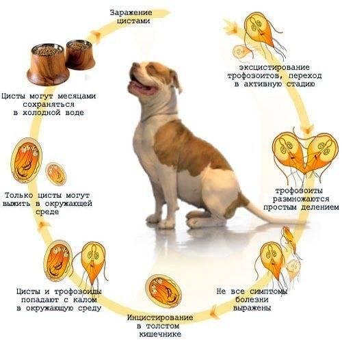 Глисты у собак: симптомы, лечение и профилактика - интересное про собак