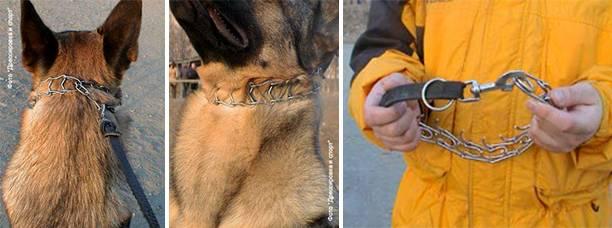 Как правильно выбрать и пользоваться строгим ошейником для собаки