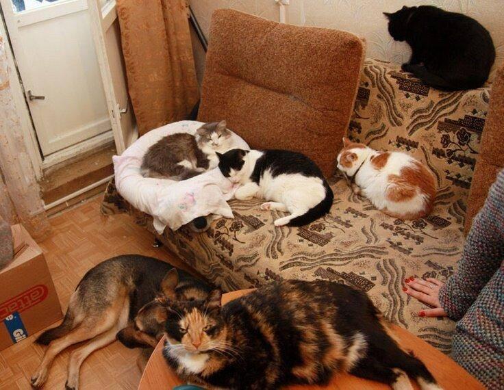Условия для содержания кошек в квартире правила и ответственность