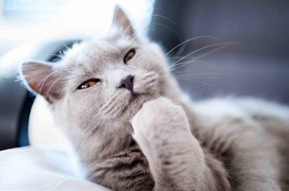 Понимают ли кошки и коты человеческую речь – как понять друг друга