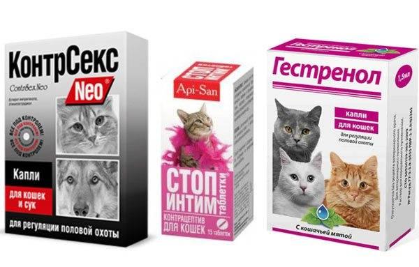 Гормональный укол для кошек от беременности