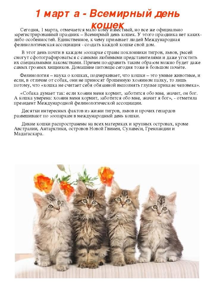 1 марта – день кошек в россии. история праздника, интересные факты о кошках
