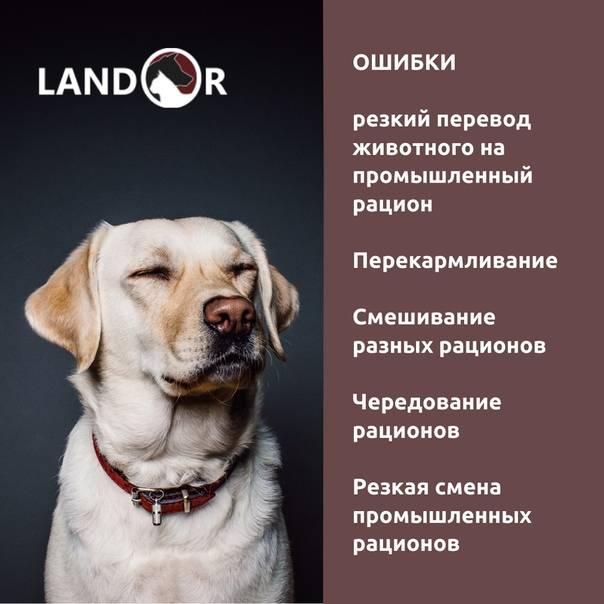 Рацион кормящей (лактирующей) собаки. собаки от а до я